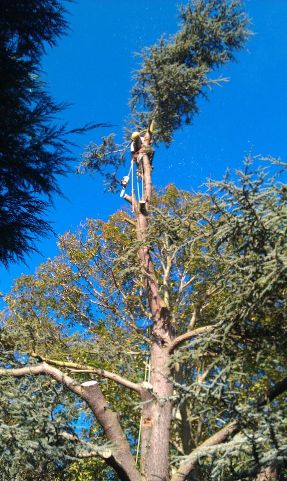 Tree surgeon Kelso.