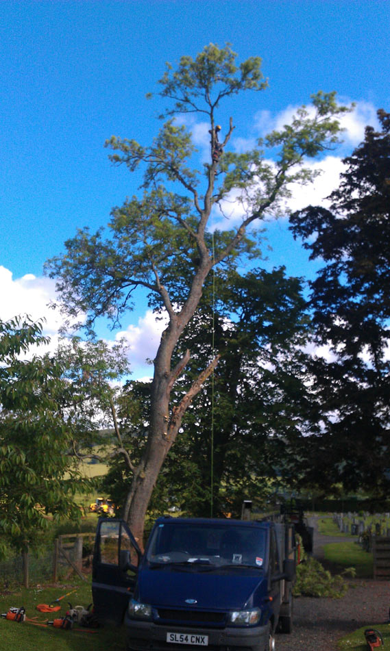 TD Tree & Land Services pruning a tree in Milngavie