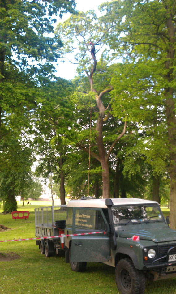 Removing dead wood from oak trees, Victoria Park, Peebles.