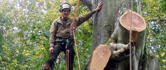 Domestic Tree Services