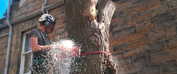 Tree surgeon Tom Dixon felling a tree in Newington Edinburgh.