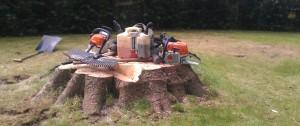 A large stump at Gogar awaiting Stump Grinding