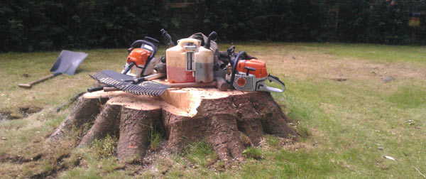 A large stump at Gogar awaiting Stump Grinding