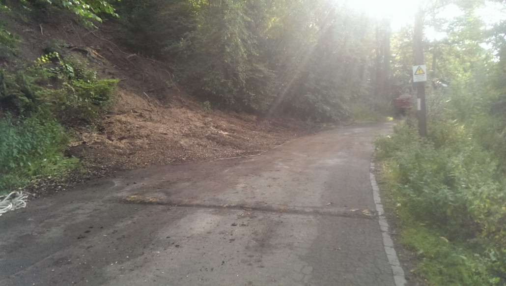 After stump grinding.