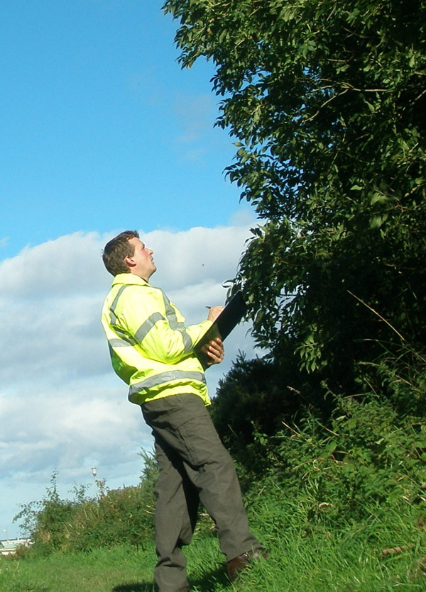 Tree Surveys and Reports