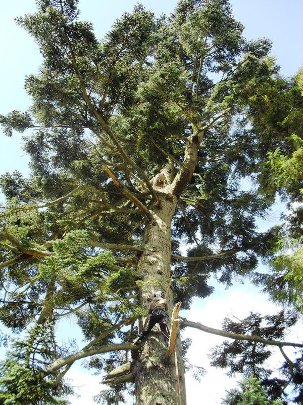 Tree Surgeon Borders