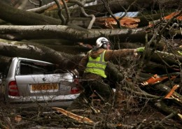 A huge Beech tree falls over Quality Street, Edinburgh