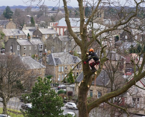 Stirling, the view past Finn Millard