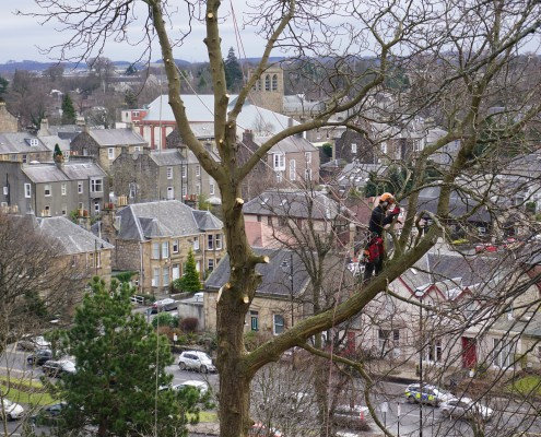 Stirlingshire tree Felling