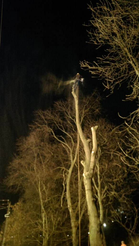 Dismantling an elm in Princes Street Gardens