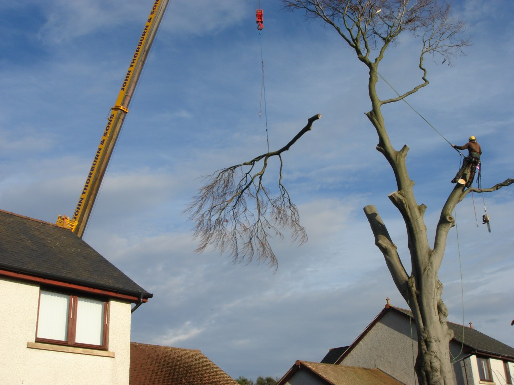 tree branch, suspended over the house by tree surgeon tdtrees