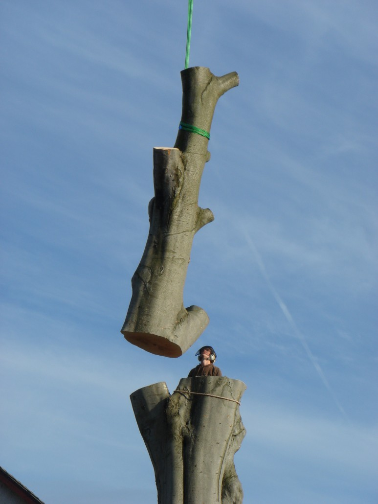 Tree surgeon Andrew Lawton taking down a tree in Penicuick
