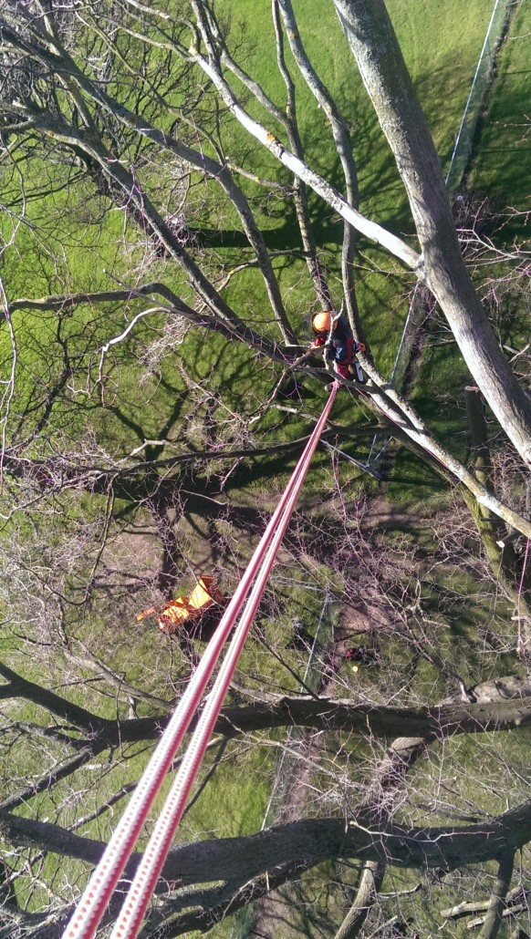 Looking down from the top of the tree towards the wood chipper.
