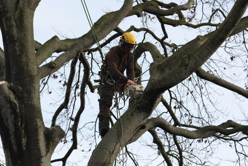 Cranes are quick for tree surgeons taking down large trees like this.