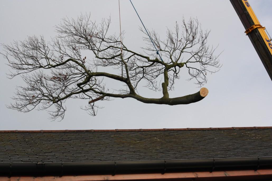 Balancing a limb like this takes skill.
