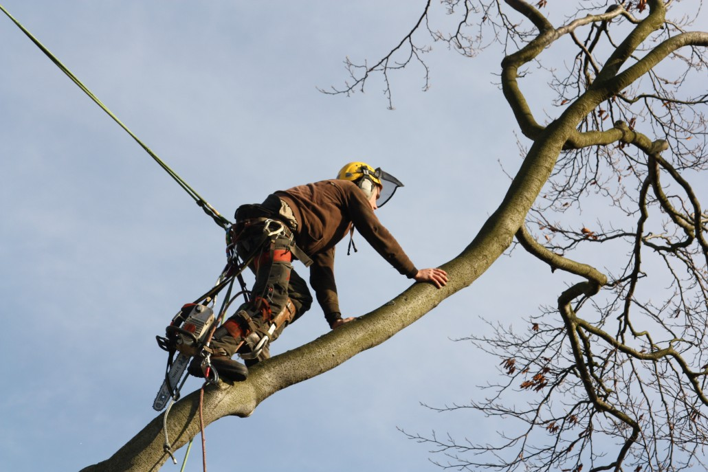 Tree surgeon Andrew Lawton walking out to find a suitable attachment.