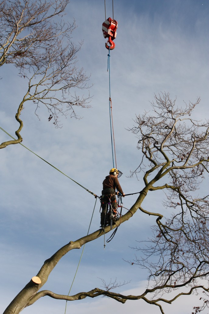 tree surgeon Andrew Lawton attaching the tree branch to the crane.