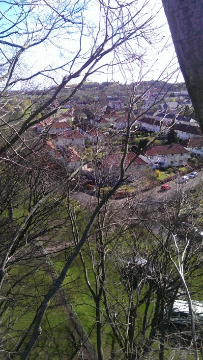 Tree surgeons view from the top of the tree in Liberton.