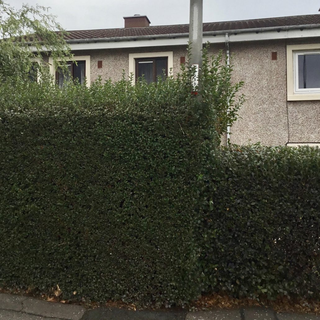 Hedge interfering with lamp post